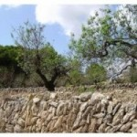 Photo of listing ID ref#7679: Land - Undeveloped for sale in Spain, Javea