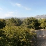 Photo of listing ID ref#9792: Land - Undeveloped for sale in Spain, l'Alfàs del Pi